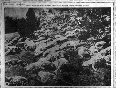 Oregonian newspaper photo of slaughtered sheep