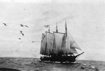 Lumber schooner Wawona, photographed around 1900.